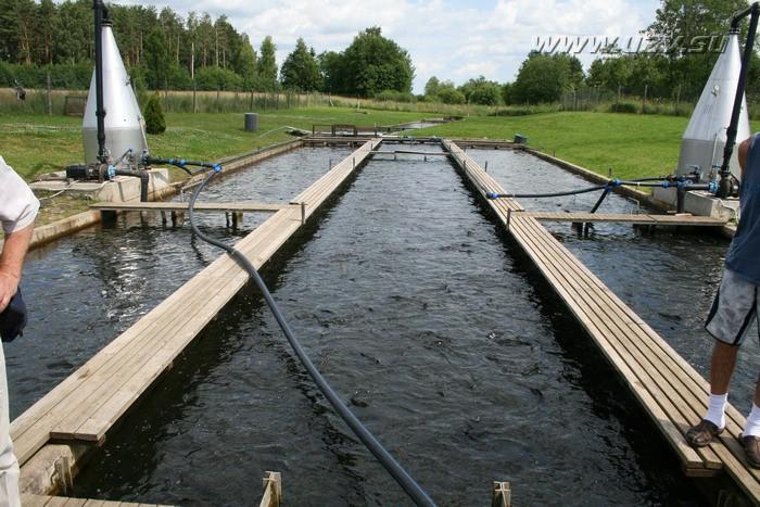 Искусственный водоем для разведения рыбы своими руками